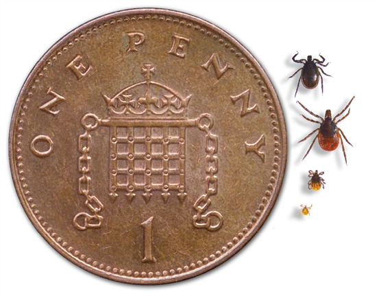 tick penny