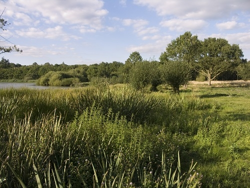 Epsom Common Great Pond and Grazing area